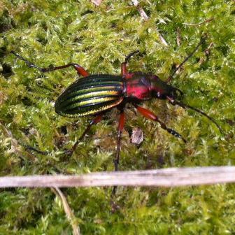 Atelier nature enfants hotel a insectes e domzal