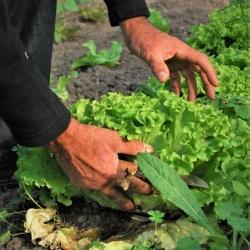 Vegetables 742098 1921